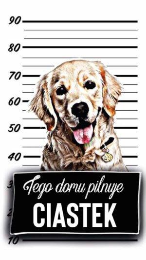 Naklejka pies w domu